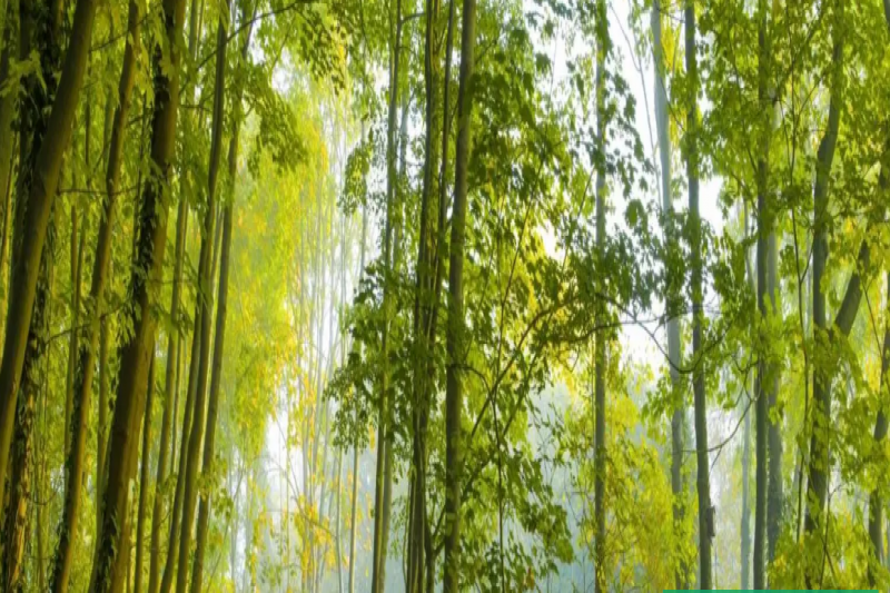 This Travel Company Will Plant Trees For Every Flight And Hotel Room Booked