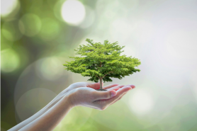 Simple Steps Hotels Can Take For Climate Consciousness