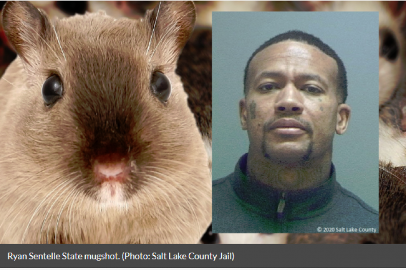 Utah Man Busted For Using Mice, Hamsters To Get Free Hotel Rooms