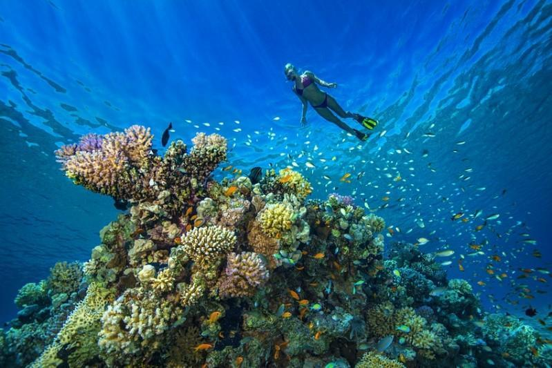 Dive Travel names Egypt #2 scuba diving destination for 2nd year in row Egypt Independent