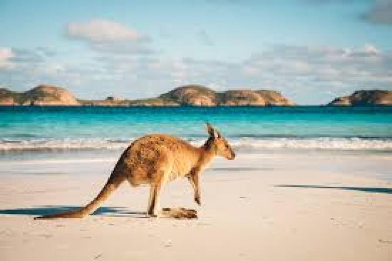 NSW tourism experienced worst hit during festive months