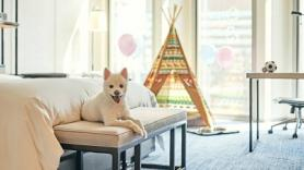 Paw-some Pet Package at Four Seasons Hotel Seoul