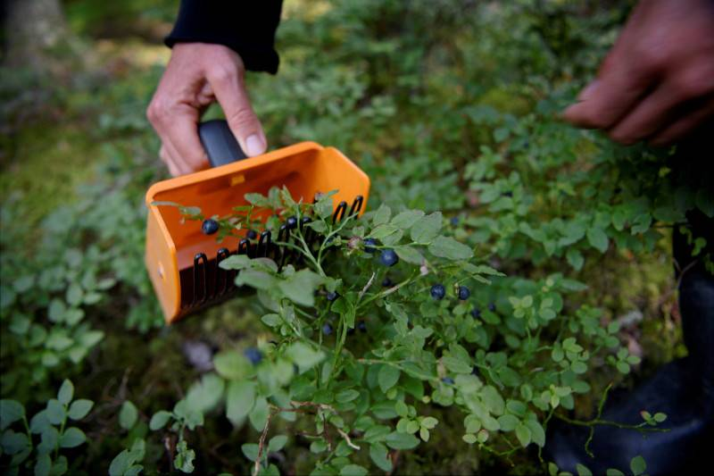 Seasonal worker virus outbreak, infections from Spain and Estonian travel restrictions: Today's news roundup