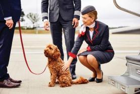 Vista Jet sees 86% increase in pet travel